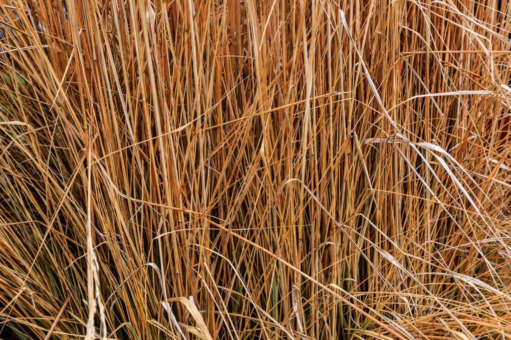 Grass, Tall, dry